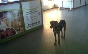 Registro de hogares de tránsito y/o adopción para perros callejeros