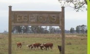 Gran fogón familiar en la localidad de Espigas