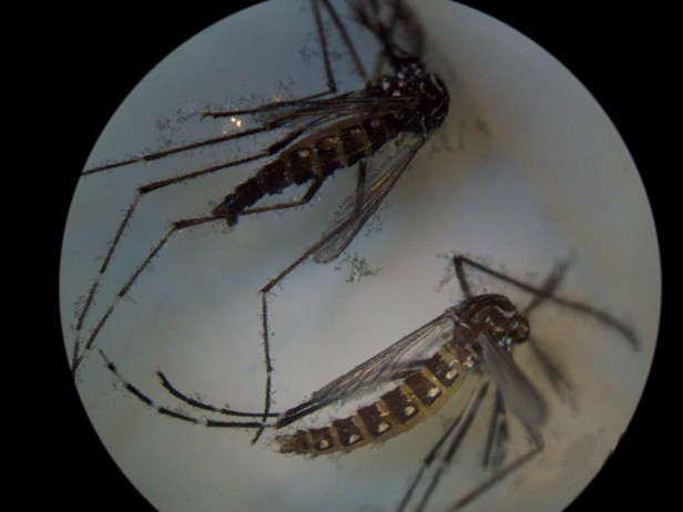 Dengue: Olavarría ya lanzó la campaña de prevención