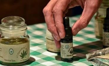 Cannabis medicinal: realidades argentinas y chilenas