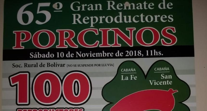 65º Gran Remate de Reproductores Porcinos