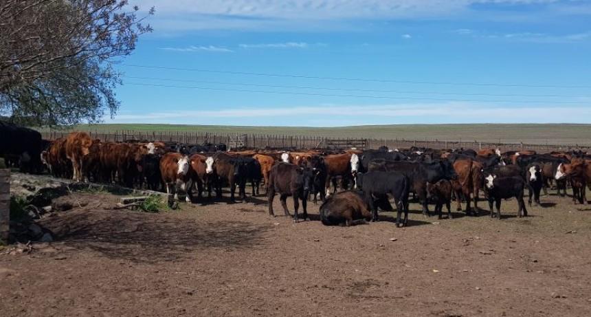 Animales invasores: Agroindustria no da por acreditada la propiedad