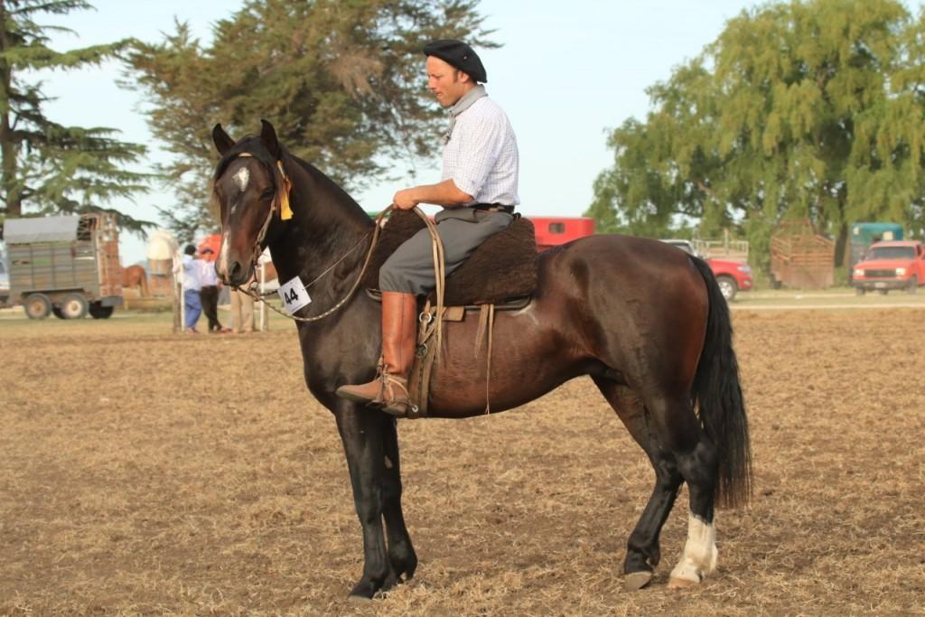 Mandinga Candil otro criollo consagrado en Laprida el fin de semana pasado