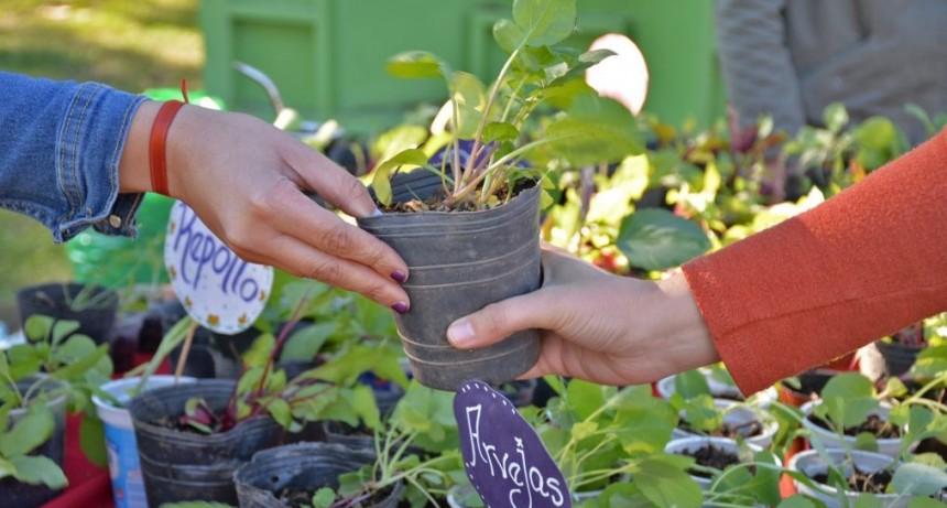 Vuelve el Ecocanje: residuos reciclables por un plantín y una ecobolsa
