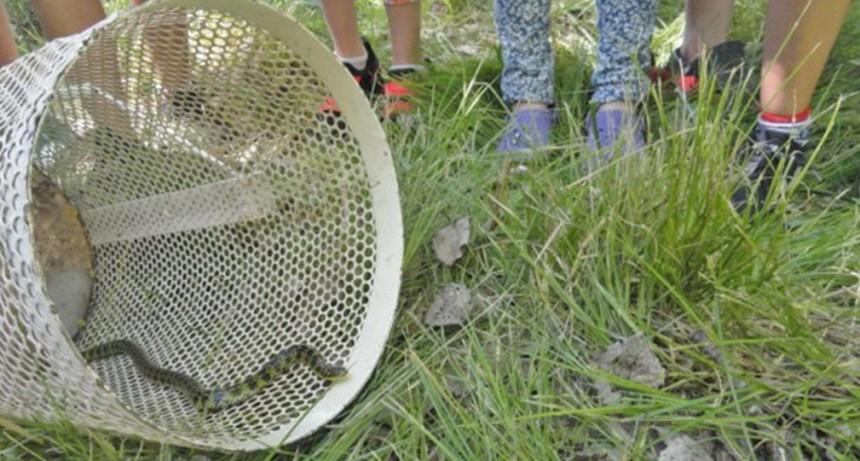 Biodiversidad: se liberan dos falsas yararás y una culebra verde y negra