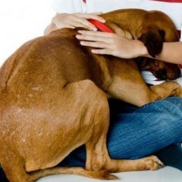 Las mascotas: cómo cuidarlas de la pirotecnia