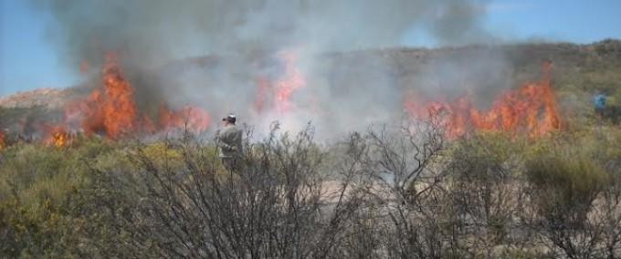 Alerta por sequía e incendios: Bomberos Voluntarios acudieron a más de 240 servicios en el mes