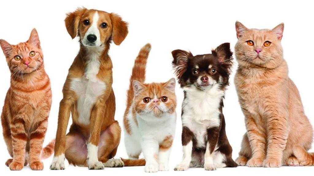 Las Fiestas, el calor y el cuidado de nuestras mascotas