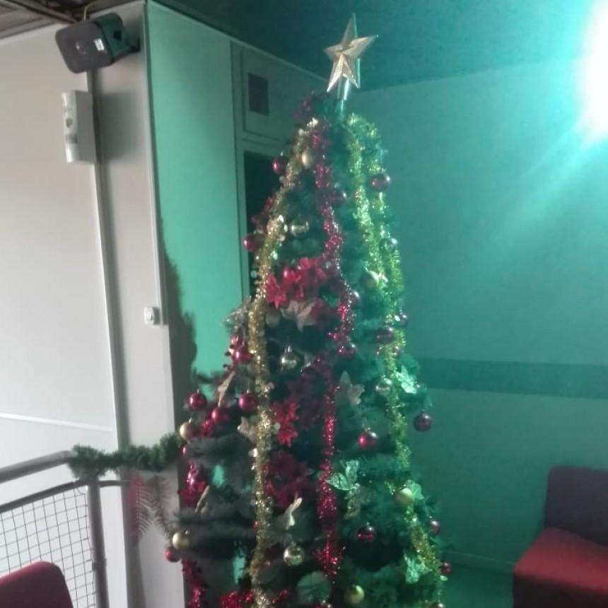 En Lu32 también armamos el arbolito de Navidad