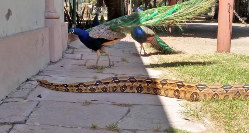 Aprendemos sobre reptiles en La Máxima