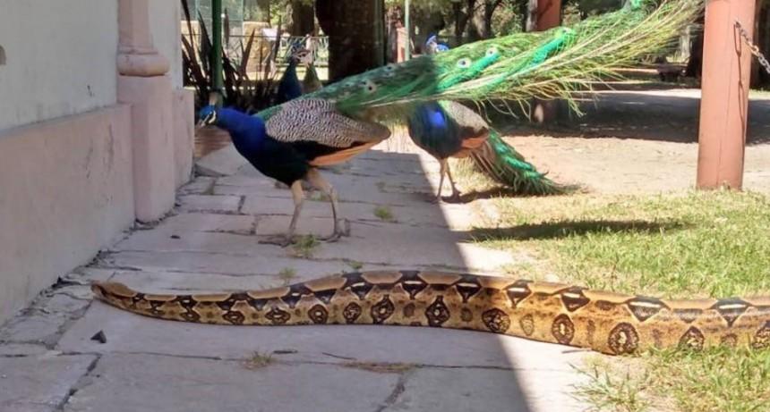 """Aprendemos sobre reptiles en """"La Máxima"""""""