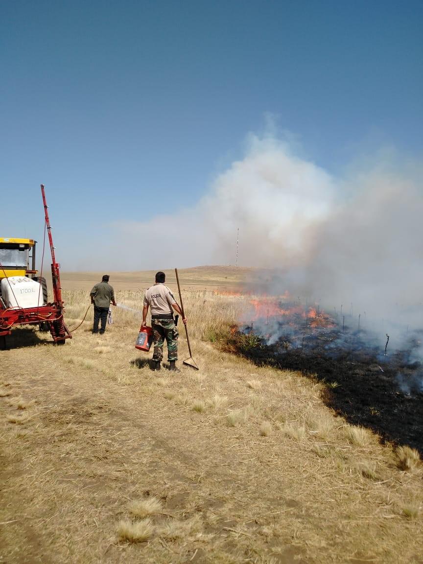 Incendio acabó con 20 vacunos y varias hectáreas de avena