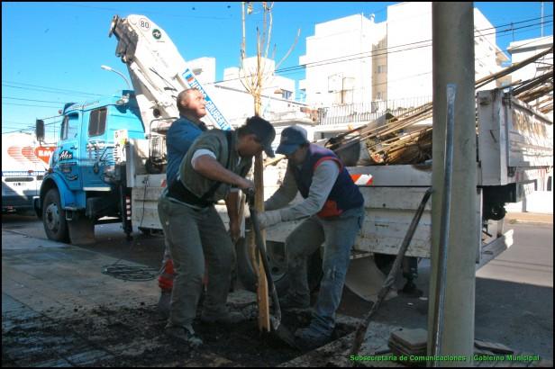 Plan Regulador de Arbolado Público: comienzan las plantaciones en el barrio Pueblo Nuevo