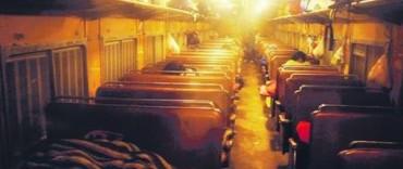 Tren de pasajeros: una crónica periodística refleja el estado del tren que pasa habitualmente por Olavarría