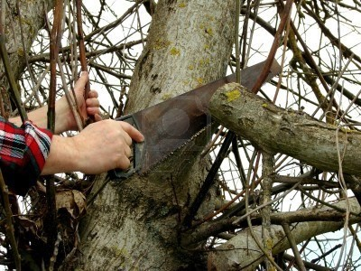 Retiro gratuito de ramas de poda
