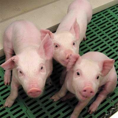 Reprogramación de la Jornada de Formalización y Mejoramiento de la Actividad Porcina