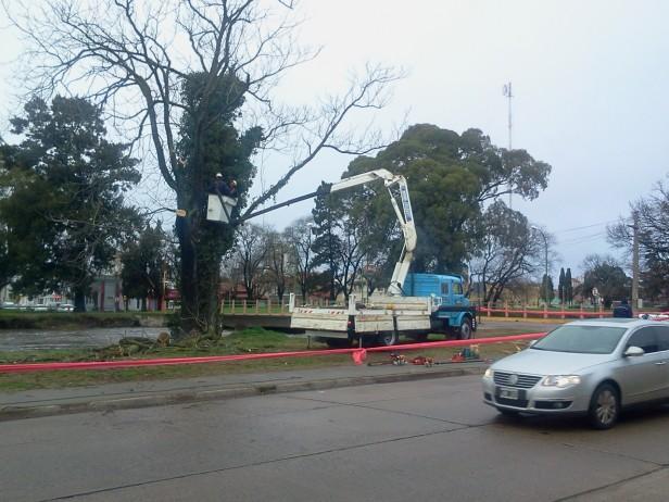 El municipio retira árboles cuyas raíces estaban en terrenos socavados