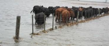 Comportamiento Hidráulico: al arroyo Tapalqué  sigue con tendencia a la estabilidad