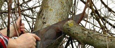 Hasta este viernes retiran de manera gratuita las ramas de poda