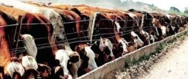 Subas de hasta 100% en alimentos para engordar ganado