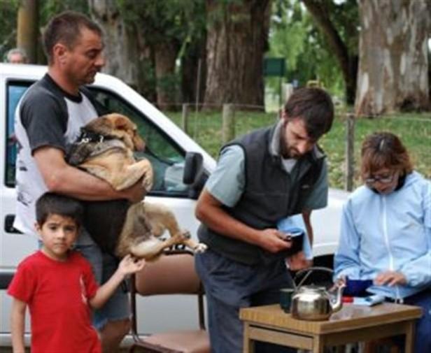 Comienza la vacunación antirrábica canina y felina 2012