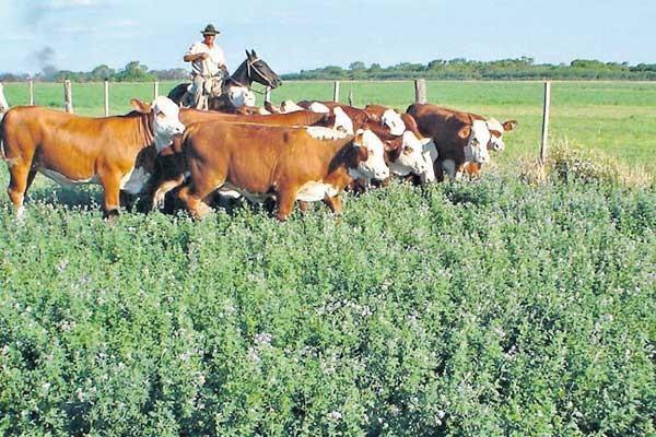 Los sueldos de los trabajadores rurales aumentaran un 28 %