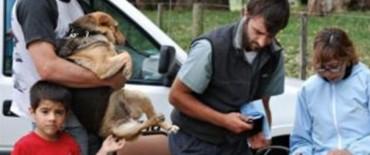 El 15 de octubre se inicia el Cronograma de Vacunación Antirrábica Canina y Felina 2012
