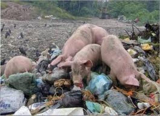 """En Saladillo/""""Queremos que se termine la práctica ilegal de introducir cerdos en el basural"""""""