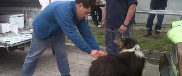 Prosigue la vacunación antirrábica canina y felina 2012