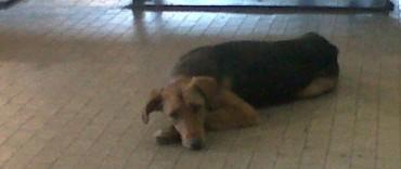 APOAA advierte sobre el impacto de la pirotecnia en las mascotas