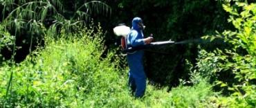 Prevención del dengue: continúa la fumigación