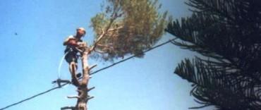 Poda de árboles: se solicita a los vecinos que se asesoren en el Municipio