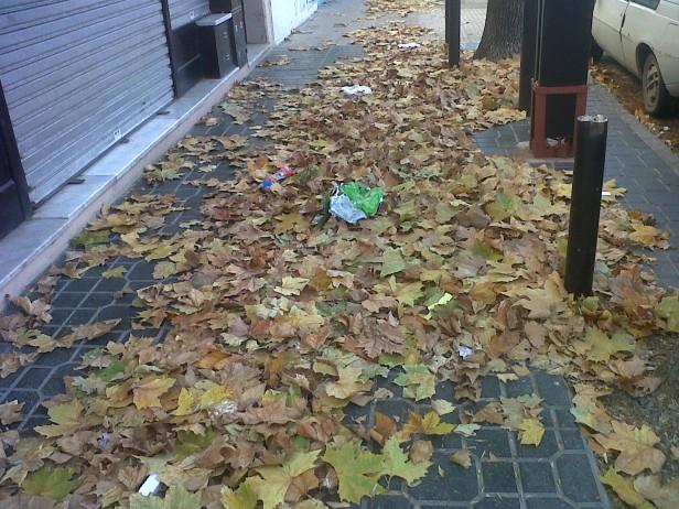 Gran cantidad de hojas sobre las calles y veredas luego del viento