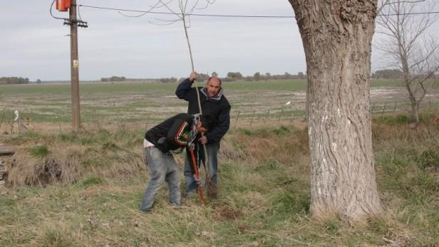 Alvear: el Municipio plantará 230 ejemplares para mejorar  el arbolado público con motivo de la semana del árbol