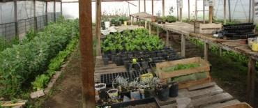 """Alumnos de """"Casa de Helen"""" producen y venden flores y vegetales para contribuir con la institución"""